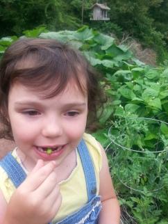 Eating freshly grown peas
